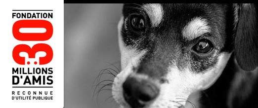 Des chiens appartenant à des agents cynophiles libérés par l'association 30 millions d'amis
