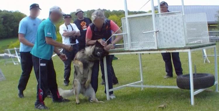 dressage chien strasbourg