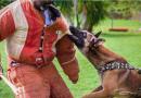 Antilles Guyane : le Domaine canin habilité à dispenser la formation du CQP ASC pour les agents de sécurité cynophile