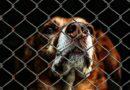Val-de-Marne : des faux agents de sécurité cynophile en situation irrégulière, un chien de sécurité pendu, 6 autres sauvés par la Fondation 30 Millions d'Amis