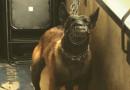Blanc-Mesnil : nouvelle intervention de la Fondation 30 Millions d'Amis pour libérer 4 chiens de sécurité enfermés et battus