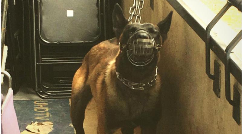 dressage chien wattrelos